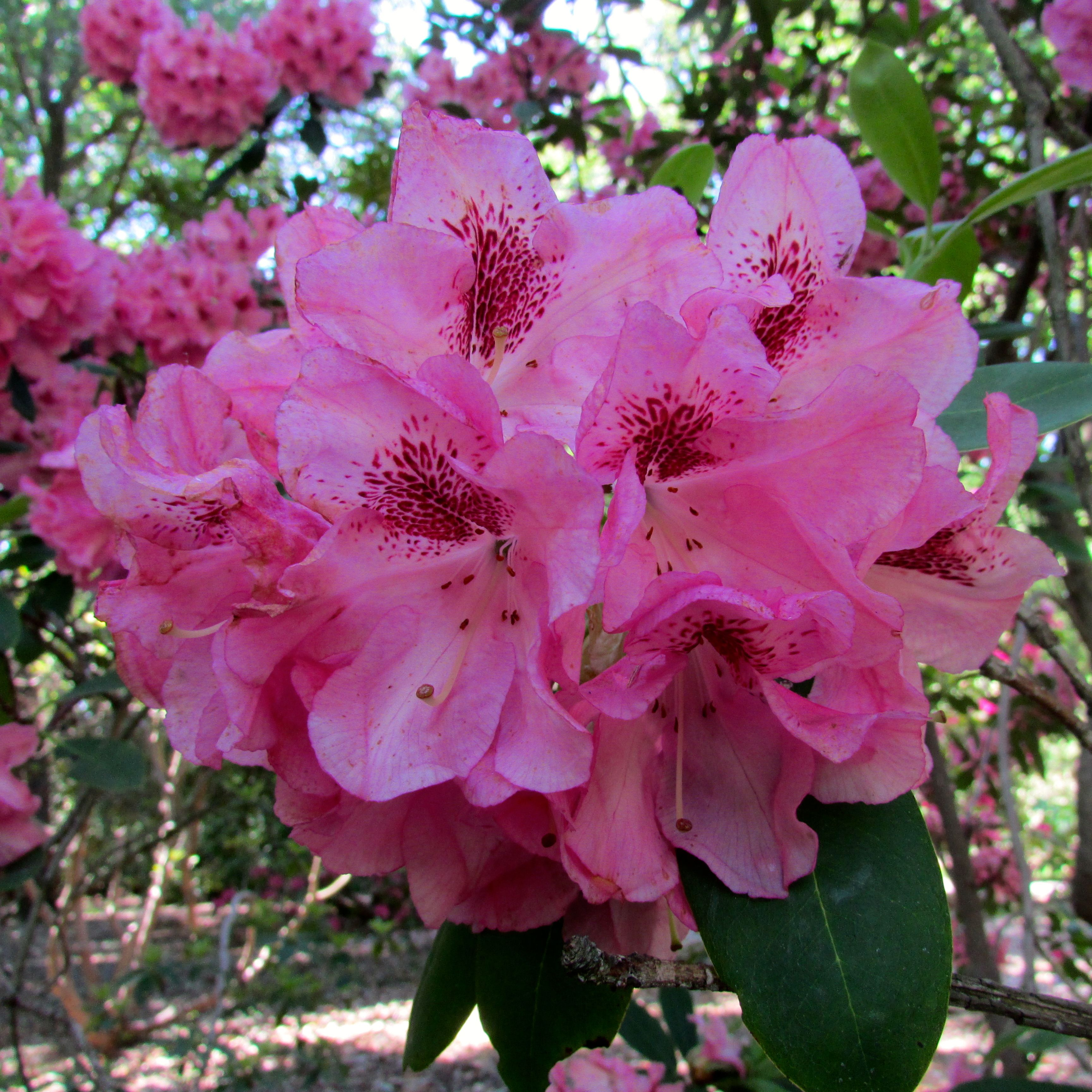 Flower Flowers Plant Plants Pretty Beauty Beautiful Outside