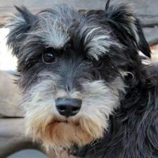Bracken Dogs Animal Rescue Animals