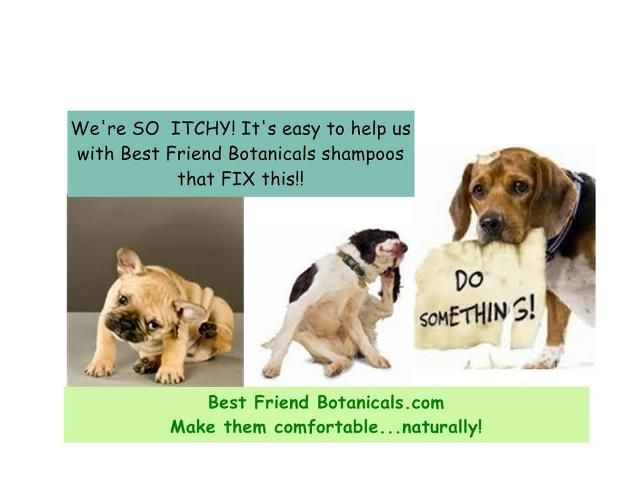 Pin by The Bark Bakery on Best Friend Botanicals Dog clinic, Dog training near me, Dog food online