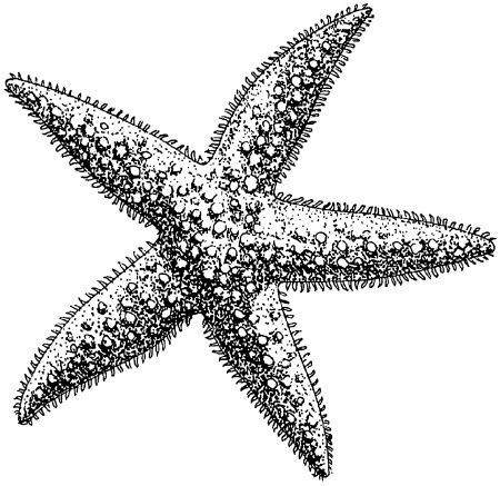 shell line drawing google search arts crafts dyi pinterest