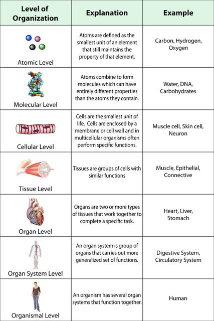 Human Anatomy And Physiology Chapter 1 The Human Organism Biology College Biology Lessons Biology Classroom