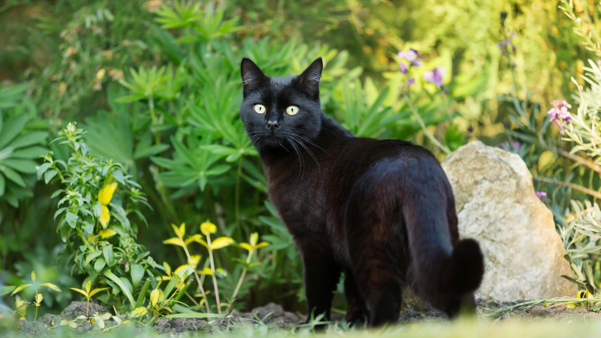 Was Tun Gegen Fremde Katzen Im Garten In 2020 Katzenkot Katzen Tiere