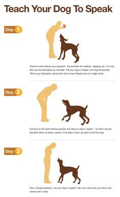 Need to train your dog check out this great dog training for How to train your dog to pee