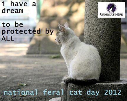 Pin By Steffer 3 On Animal Rescue My Passion Cats Funny Cats Cat Day