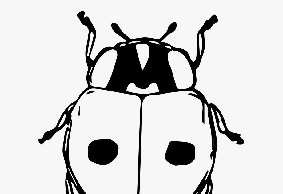 Terkeren 30 Gambar Kartun Koki Ayam Gambar Kumbang Kartun Hitam Putih Transparent Cartoon Download Ayam Ayam Kartun Ayam Halus Ay Di 2020 Kartun Gambar Crazy Eyes