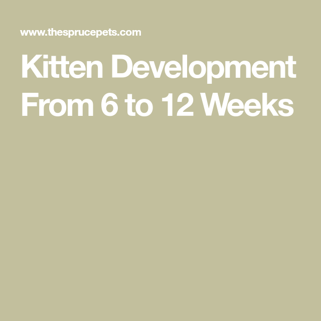 How Do Kittens Change Between 6 And 12 Weeks Of Age In 2020 Kittens 12 Weeks Litter Box Training Kittens