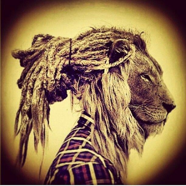 rasta lion animal instinct pinterest leones musica
