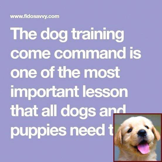Pin On Teach Dog Tricks