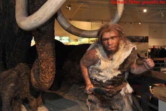 mamut vadászat a Ludovikában