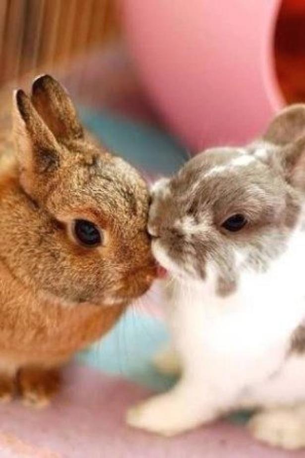 Elegant rabbit rabbitoftheday rabbithouses in 2020