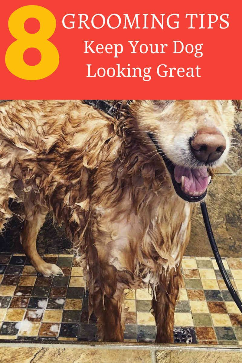 Whenever One Discusses Proper Pet Grooming Professional Pet Grooming Salons And Facilities Instantly Spri Dog Grooming Dog Grooming Business Dog Grooming Tips