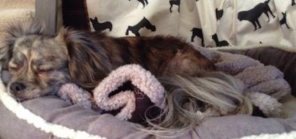 I Am Addicted to Dog Beds