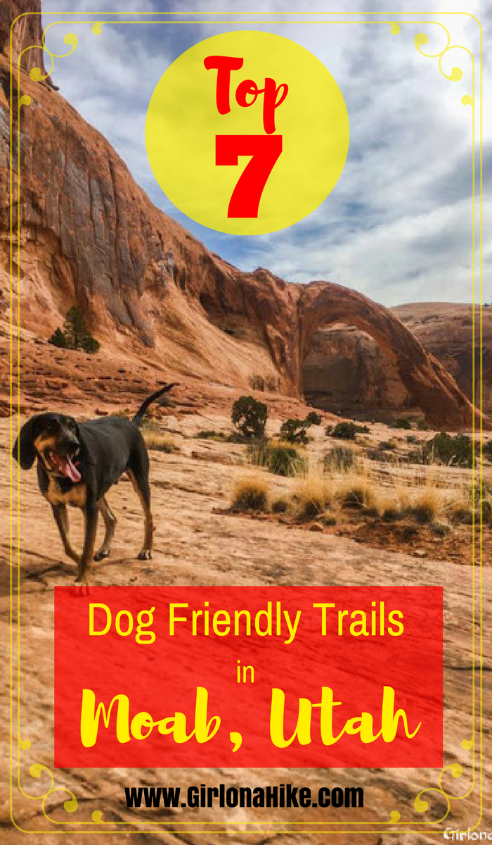 7 Best Dog Friendly Trails In Moab Utah Moab Utah Utah And Dog