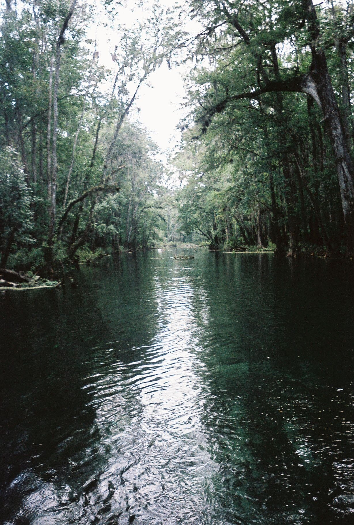 floating down the river... gainesville, florida | travel | Pinterest ...