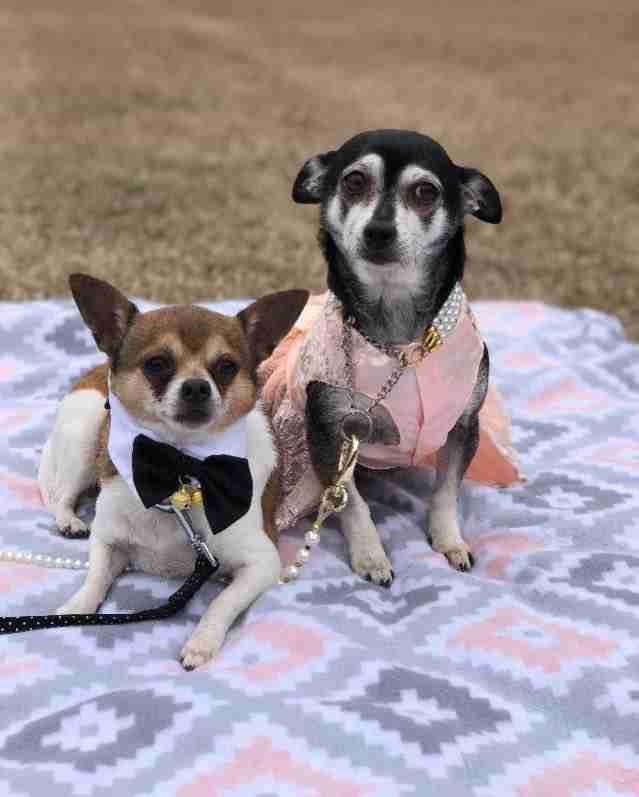 Sweetest Senior Dogs Need A Home Where They Can Stay Together