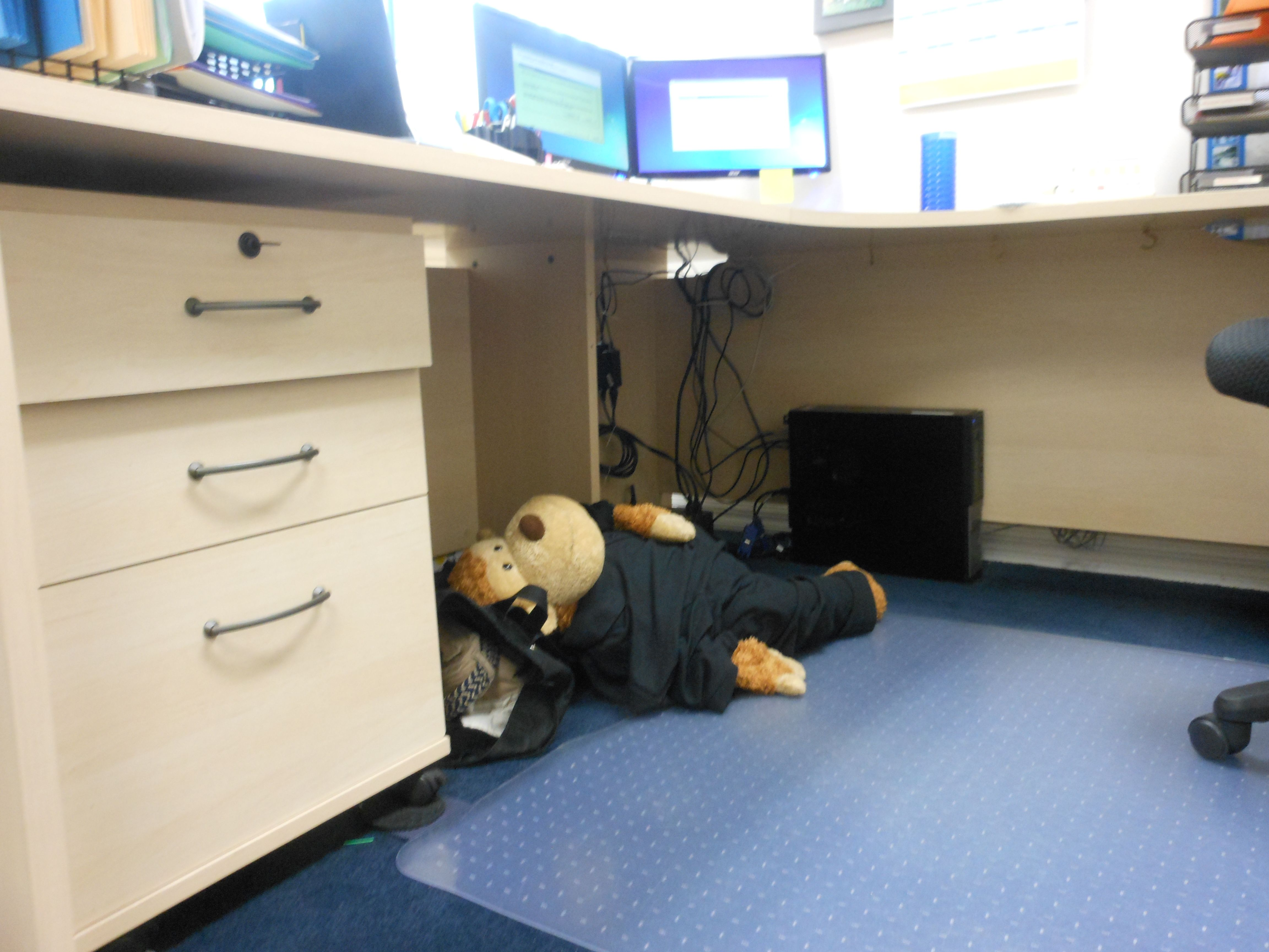 Mojo Takes A Nap Under His Desk George Costanza Reference Desk Take A Nap George Costanza