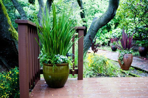 Outdoor Flower Pot Arrangements Potted Plant