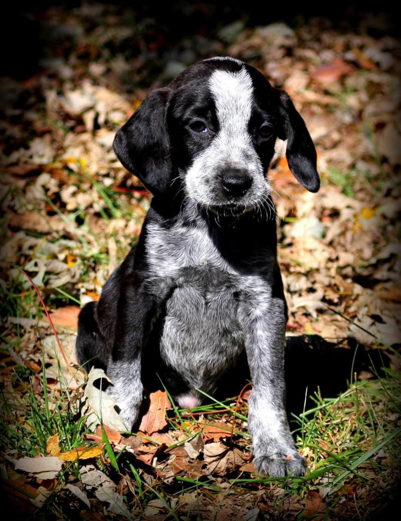 Adopt Trinka on Adoption, Pets, Animal rescue