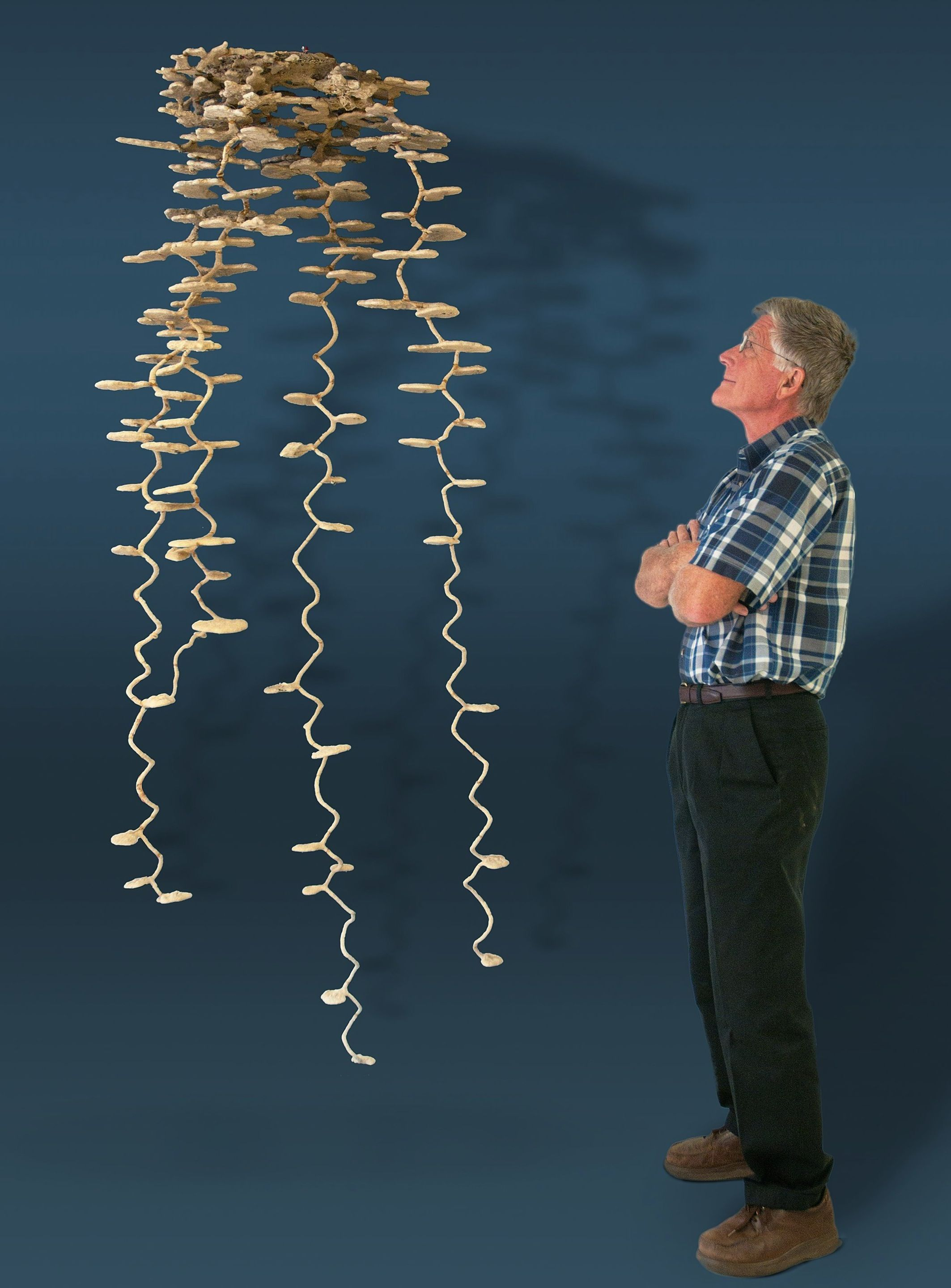 This is an aluminum cast of an ant colony. It's astounding and ...