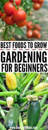 Wie man für Anfänger im Garten arbeitet. - Gärtnern für Anfänger - Die best...,  #Anfänger #arbeitet #beautifulhomegarden #besthomegarden #gemüsepflanzen