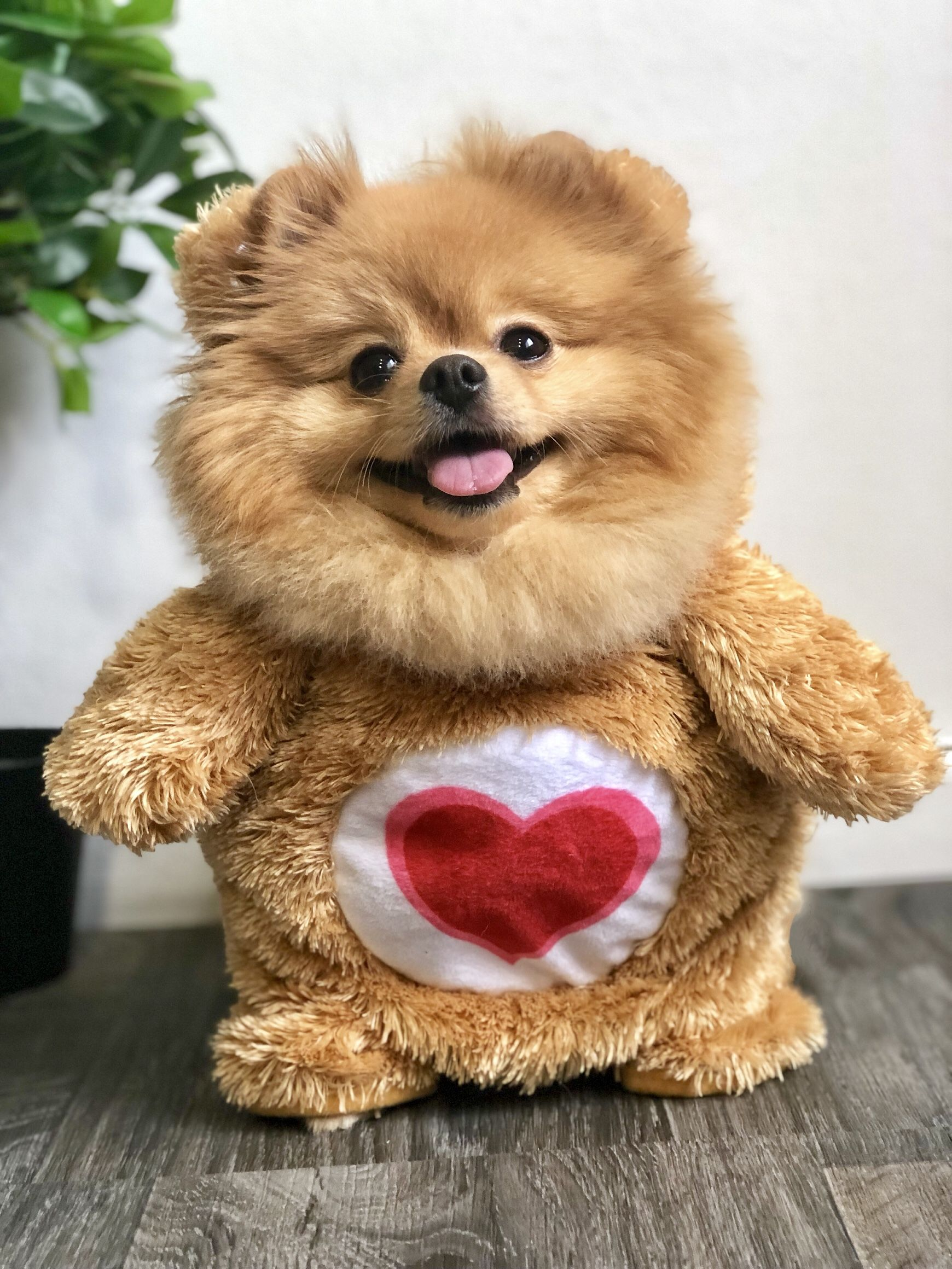 Carebear Inspired Cute Small Dogs Cutest Small Dog Breeds Cute