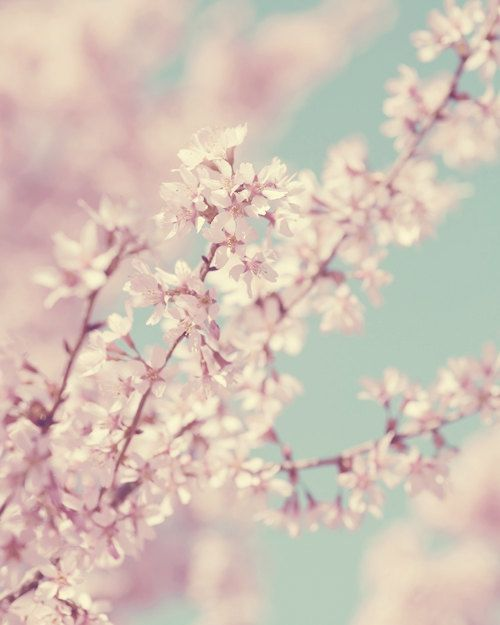 Spring Cherry Blossom Pale Pink Vintage Floral Photo French Decor Photography. $24.00, via Etsy.
