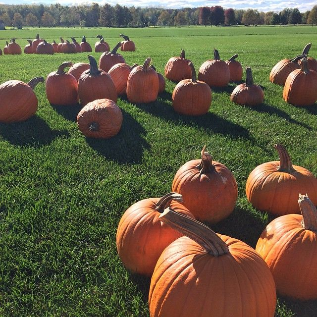 Pumpkins on a soccer field. Happy fall! #wow #fall #colors