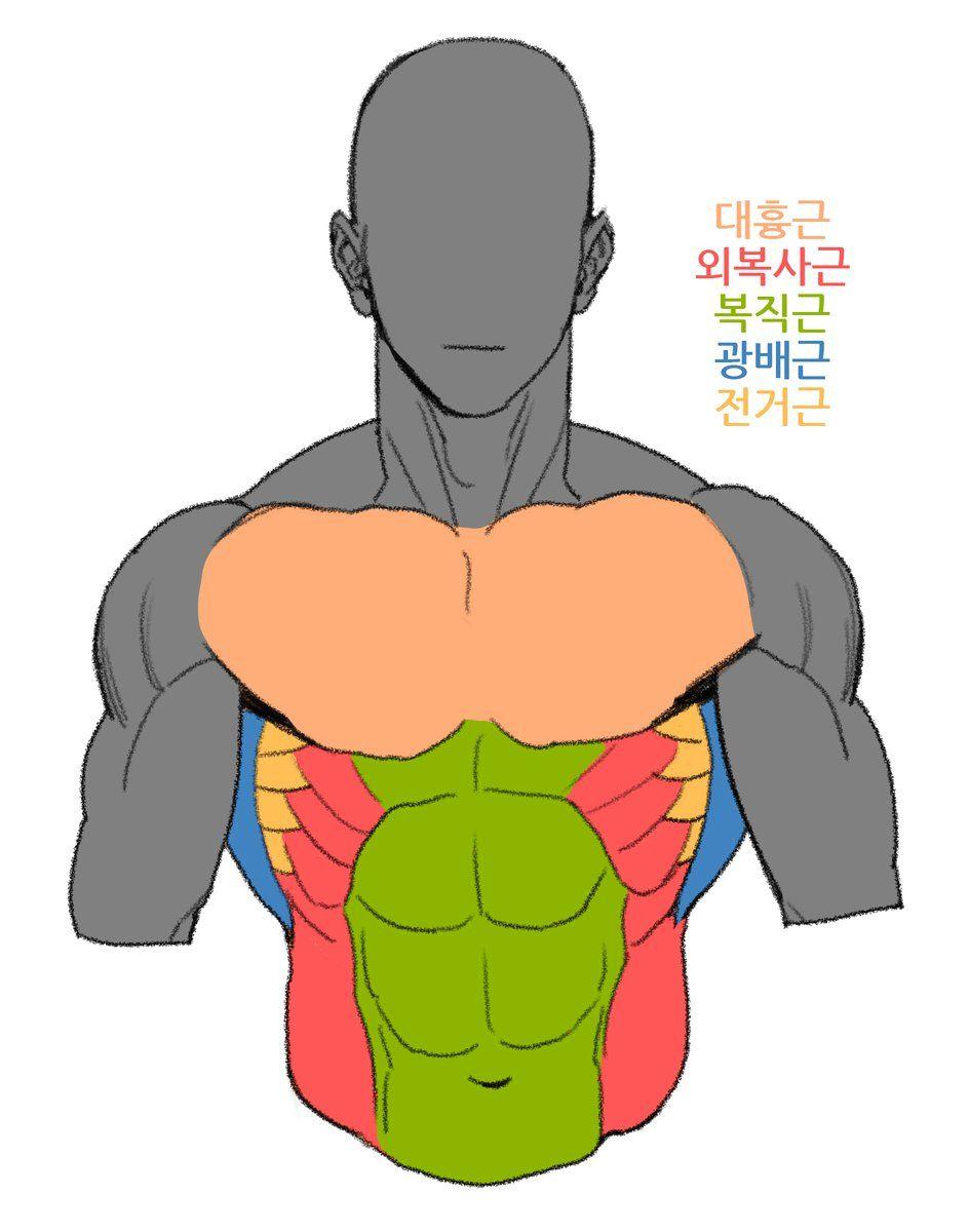 Pin von Wanit ChayaZin auf Anatomy | Pinterest | Skizzenbücher ...