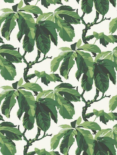 Fig Leaf Tree Wallpaper Pattern Borastapeter Oxford 1222