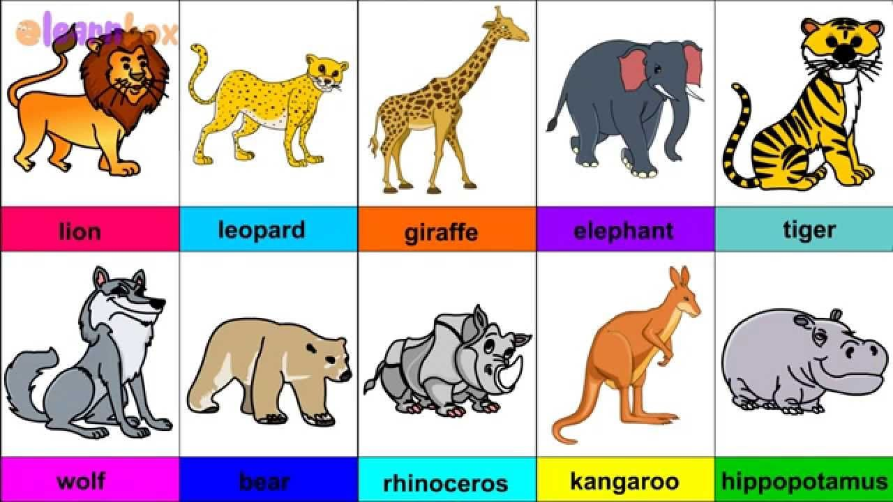 12++ Animal pictures for toddlers ideas