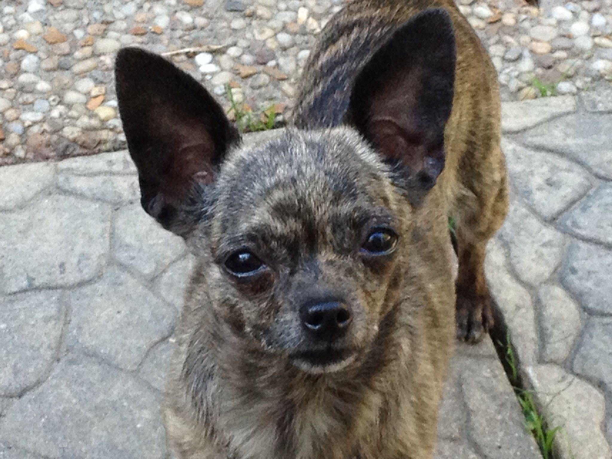 Tessa looking for a family to call her own apply now