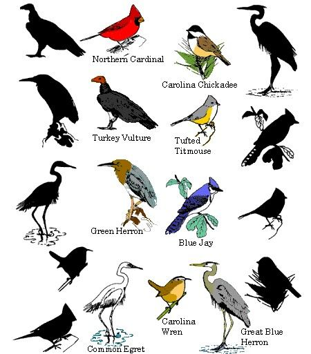 Pin By Zavana 22 On Wild Birds Pictures With Names Animals Name List Bird Photo
