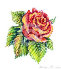 Risultati Immagini Per Fiori Disegni A Matita Colorati Disegni Da Colorare Disegno Di Una Rosa Idee Per Disegnare