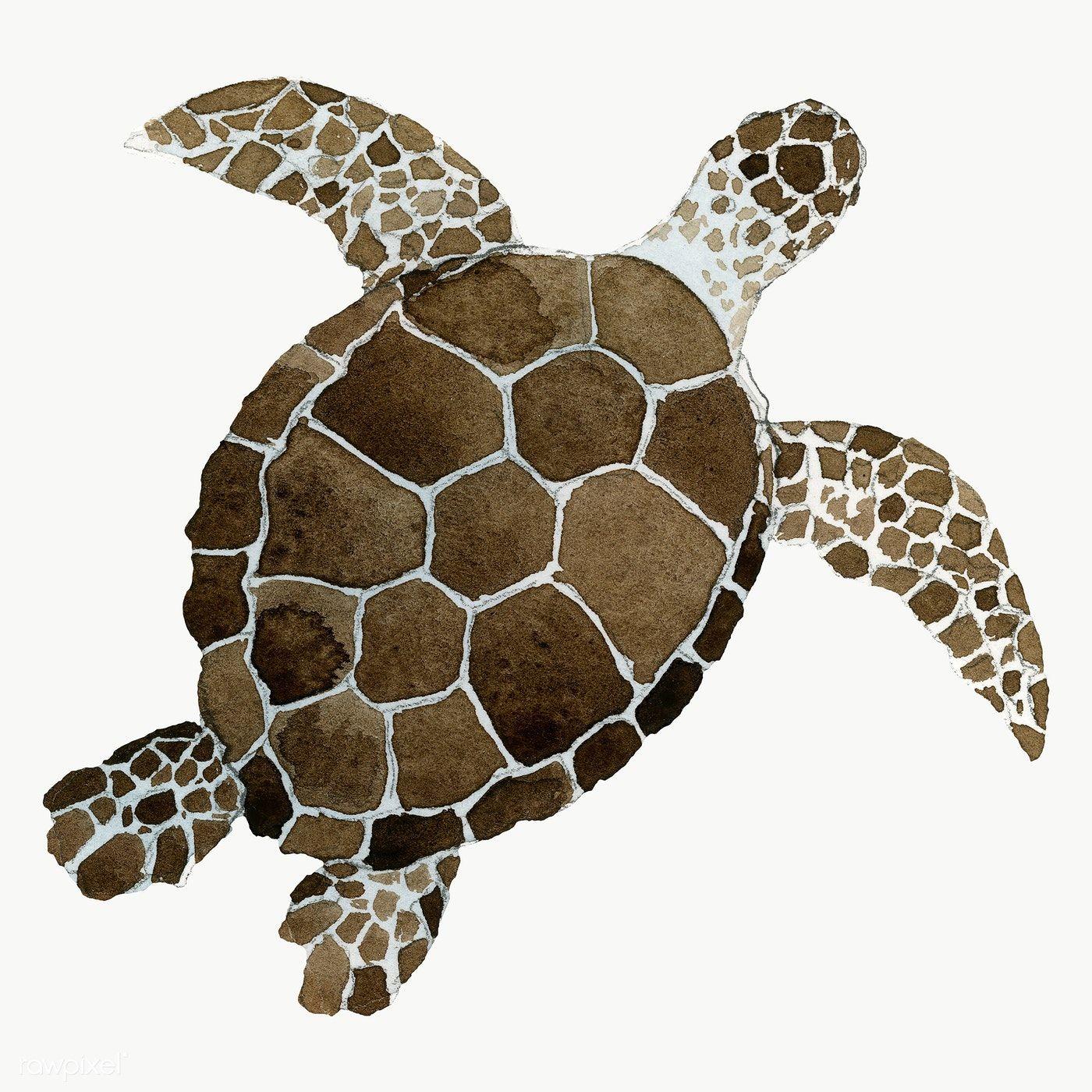Watercolor Painted Sea Turtle Transparent Png Premium Image By Rawpixel Com Niwat Turtle Watercolor Sea Turtle Watercolor Sea Turtle Art