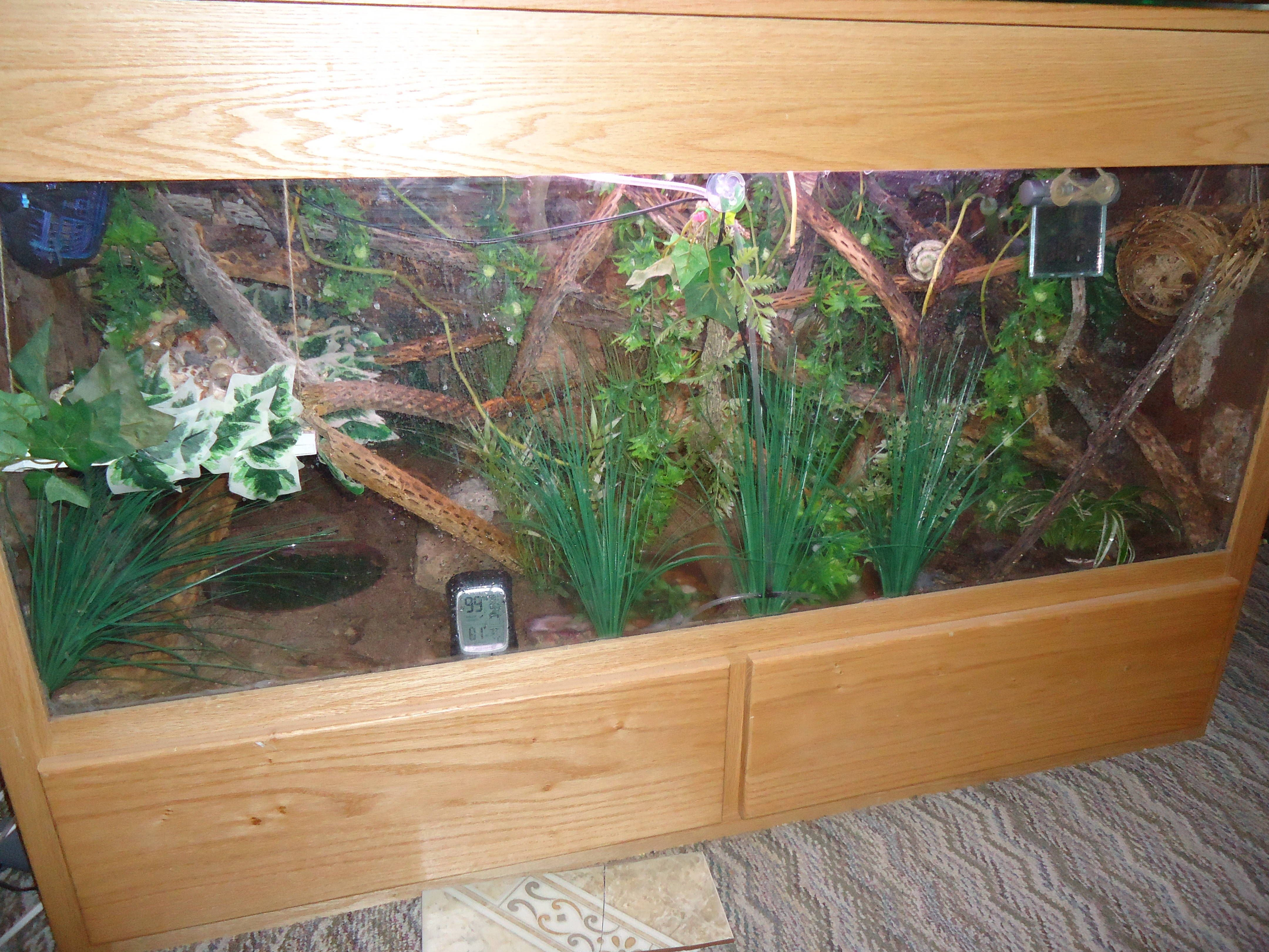 Pin By Ray Porter On Hermit Crab Habitats