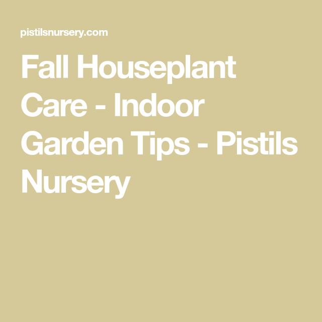 Fall Houseplant Care  Indoor Garden Tips is part of garden Tips For Fall - Fall houseplant care differs from other times of year  We've broken down exactly what you need to do so your cacti, succulents and tropicals survive winter