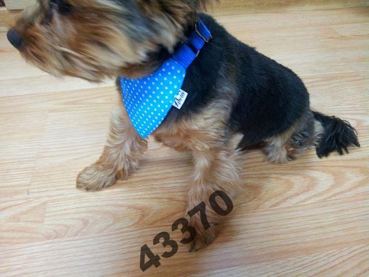 Pelo Apaszka Chustka Bandamka Bawelna Wzorzysta 4027943999 Oficjalne Archiwum Allegro Corgi Dogs Animals