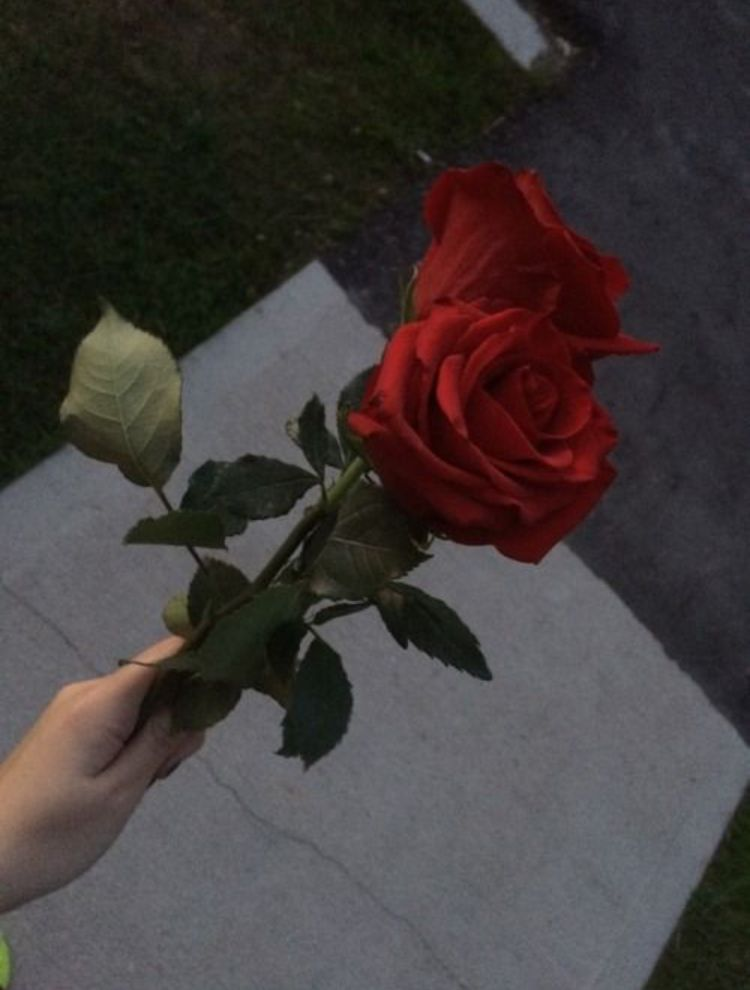 Slunting Zezi Aesthetic Roses Rose Tumblr Flower Aesthetic