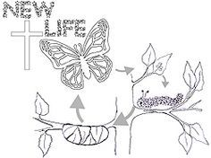 Caterpillar To Butterfly Life Cycle Image Coloring Page