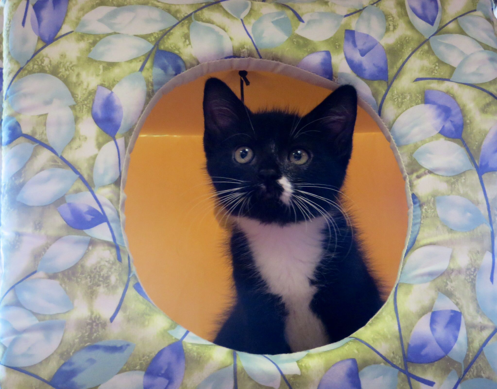 The Burlington County Animal Shelter And Pet Valu Lumberton Are Working Together To Get Some Of Our Foster Kittens Available To The Public For Adopt Cat Adoption