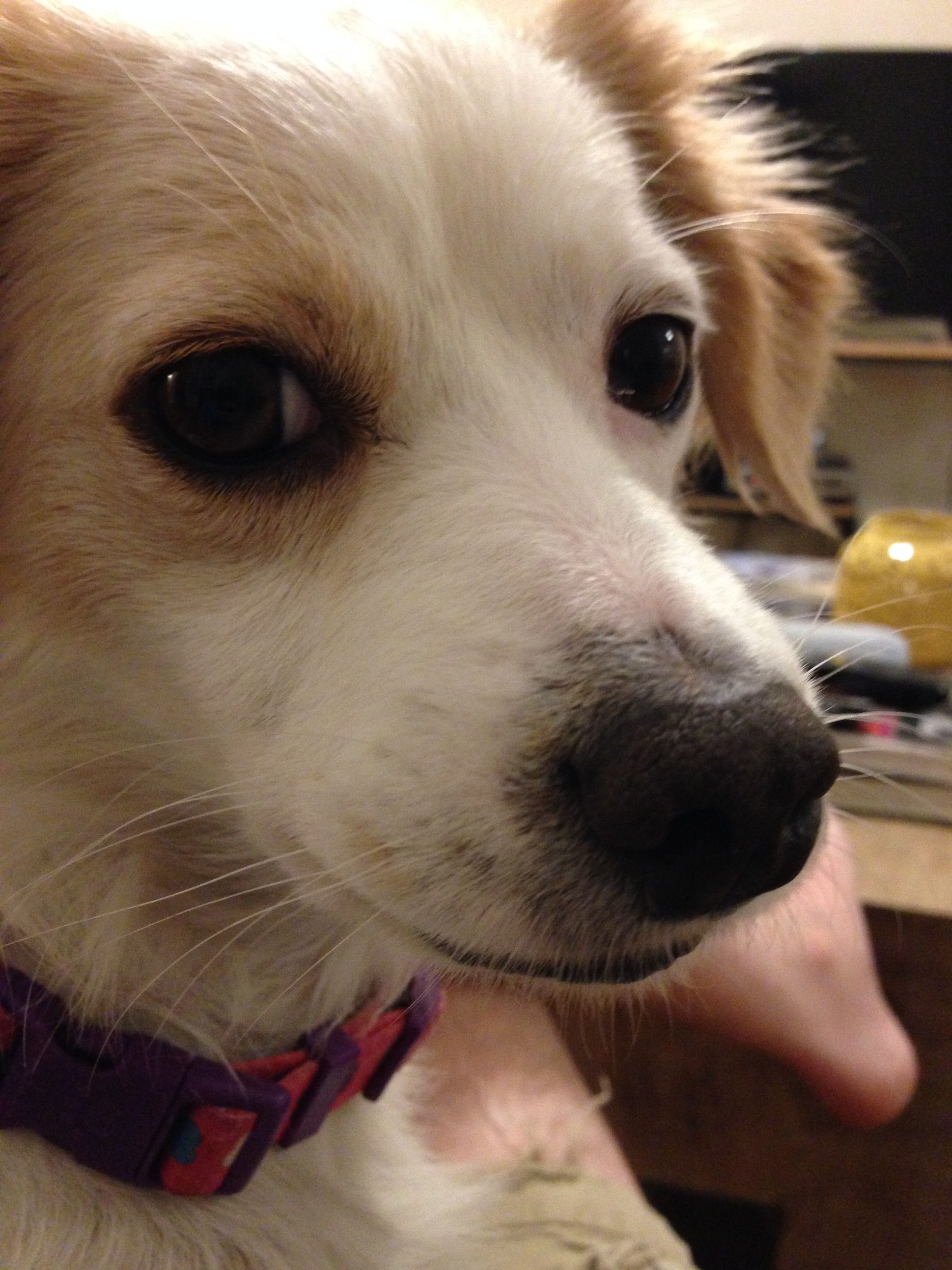 Hello iftuglpg cute pinterest dog eating dog