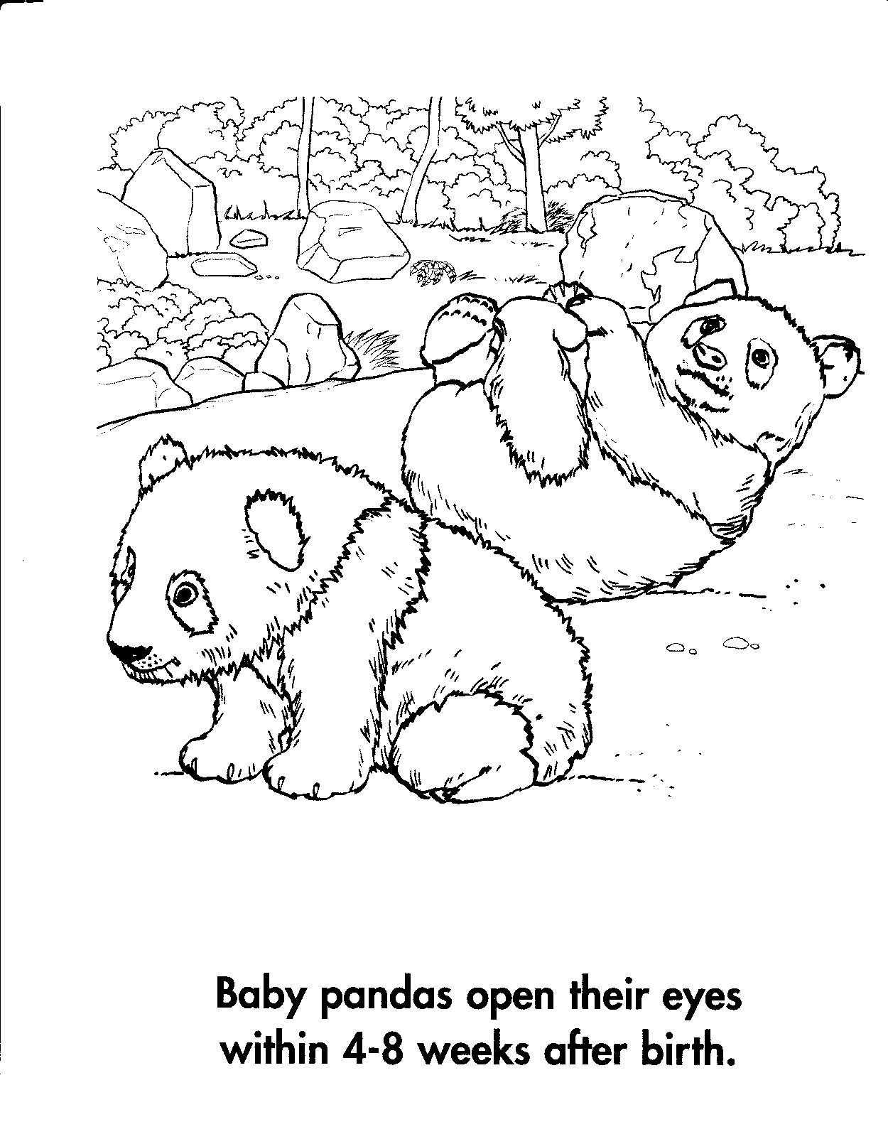 Coloring Panda Bear Coloring Pages New On Remodelling Tablet   Pinterest