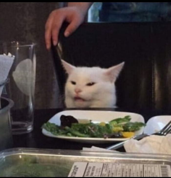 The Moment He Realized He Was Being Watched White Cat Meme Cats Cat Memes