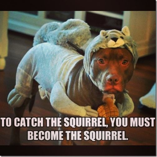 This squirrel costume will come in handy after Halloween, too