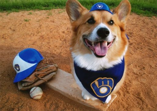 Does Your Dog Have What It Takes To Be The Brewers Top Dog Click