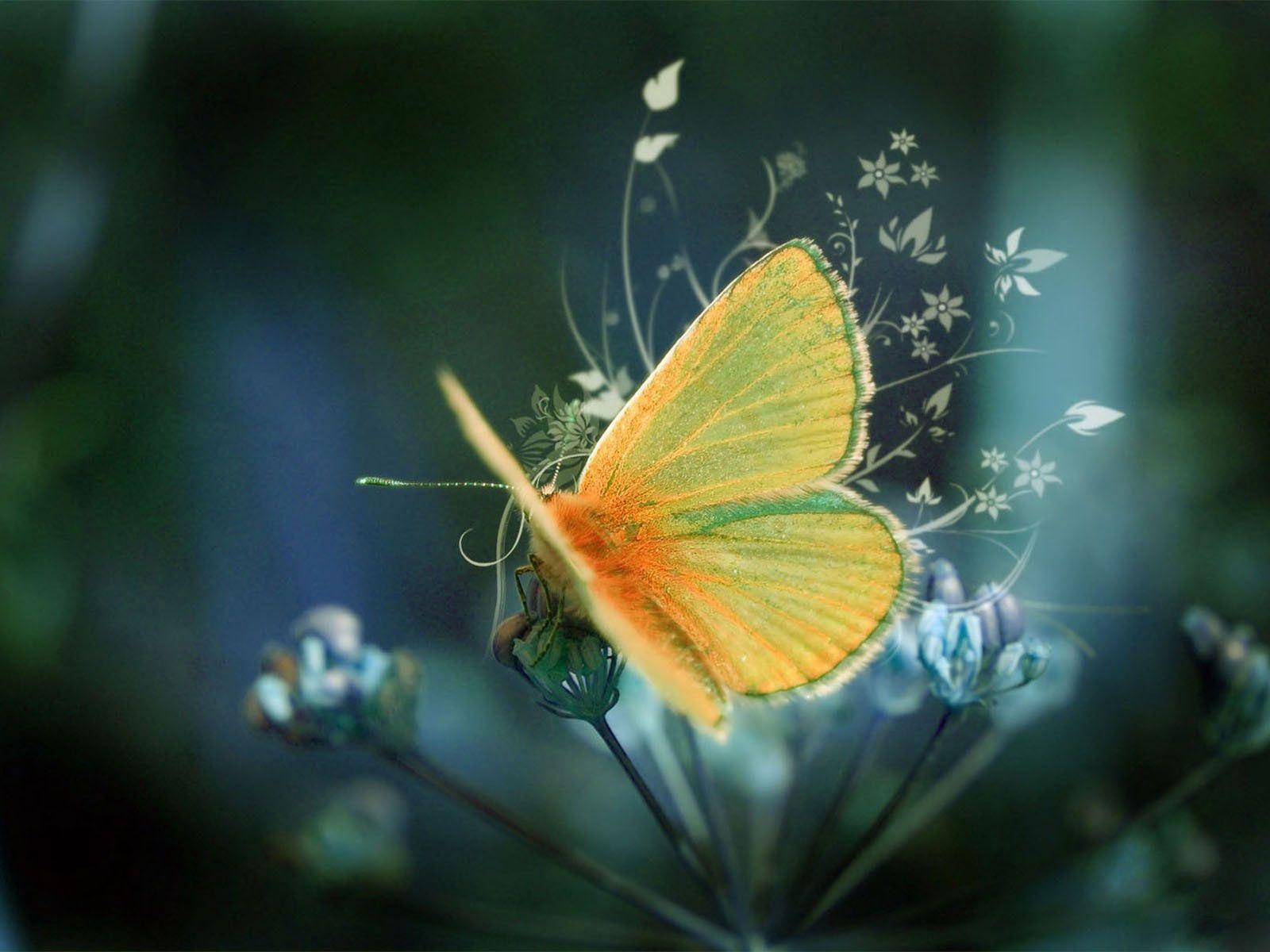 beautiful photography of beautiful butterfly wallpaper animal desktop background