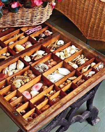 organize a seashell collection in a vintage printer tray, used as