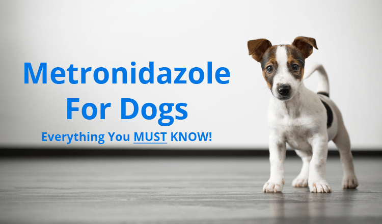 Interested to know about Metronidazole for Dogs? You've
