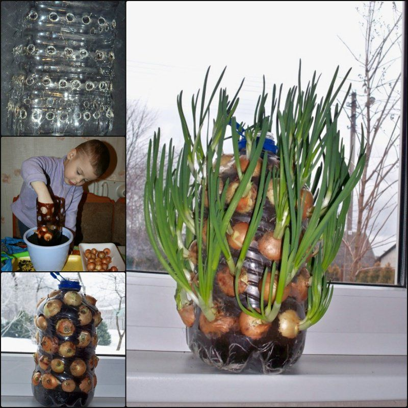 Diy vertical onion tower planter out of plastic bottle