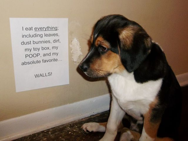 15 Dog Owners Who Are Tired Of Their Pets Bulls T Dog Shaming